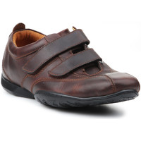 Shoes Men Low top trainers Timberland Palladian 70551 brown