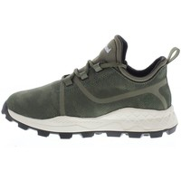 Shoes Men Low top trainers Timberland Brooklyn Green