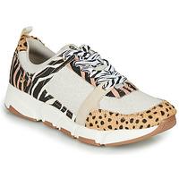 Shoes Women Low top trainers Gioseppo CREAZZO Leopard