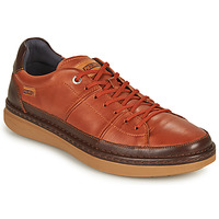 Shoes Men Low top trainers Pikolinos BEGUR M7P Brown