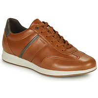 Shoes Men Low top trainers Geox AVERY Brown