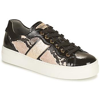 Shoes Women Low top trainers NeroGiardini  Black / Gold
