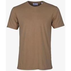 Clothing Short-sleeved t-shirts Colorful Standard T-shirt  Sahara Camel marron