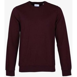 Clothing Sweaters Colorful Standard Sweatshirt  crew Oxblood Red rouge bordeaux