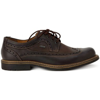 Shoes Men Derby Shoes Kammi FRETZ MEN BEFORT MOKKA Multicolore