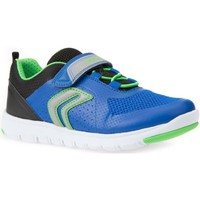 Shoes Boy Low top trainers Geox Xunday Bungee Boys Riptape Trainers blue